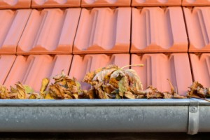 Tips to mold prevention in homes and commercial buildings in Colorado