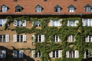 Climbing vines and your stucco exterior walls